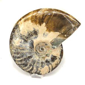 Nos Fossiles