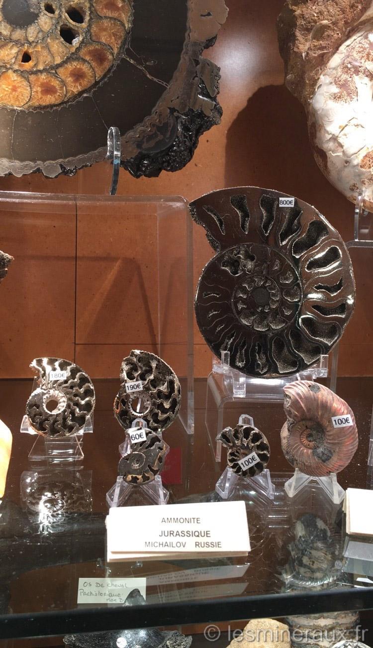 Les Minéraux du Carrousel du Louvre - Les Fossiles